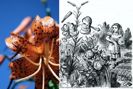 Literary Gardens (Online)
