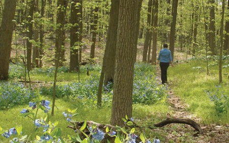 Three-hour Forest Therapy Walk