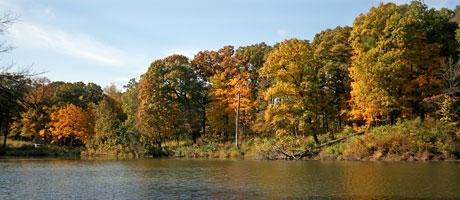 Sterling Pond at The Morton Arboretum