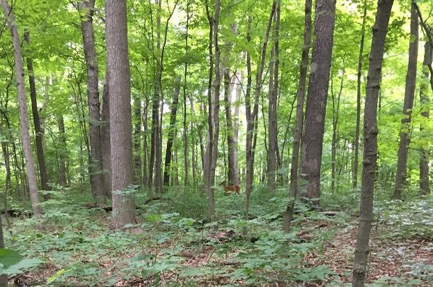 A green woodlands