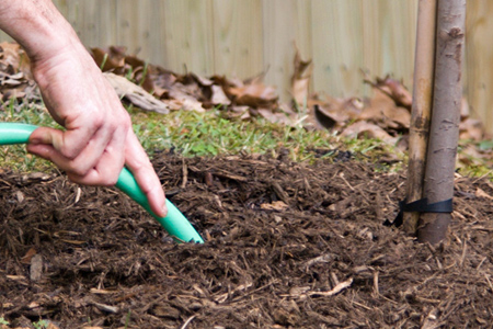 A hand holding a hose into the soil