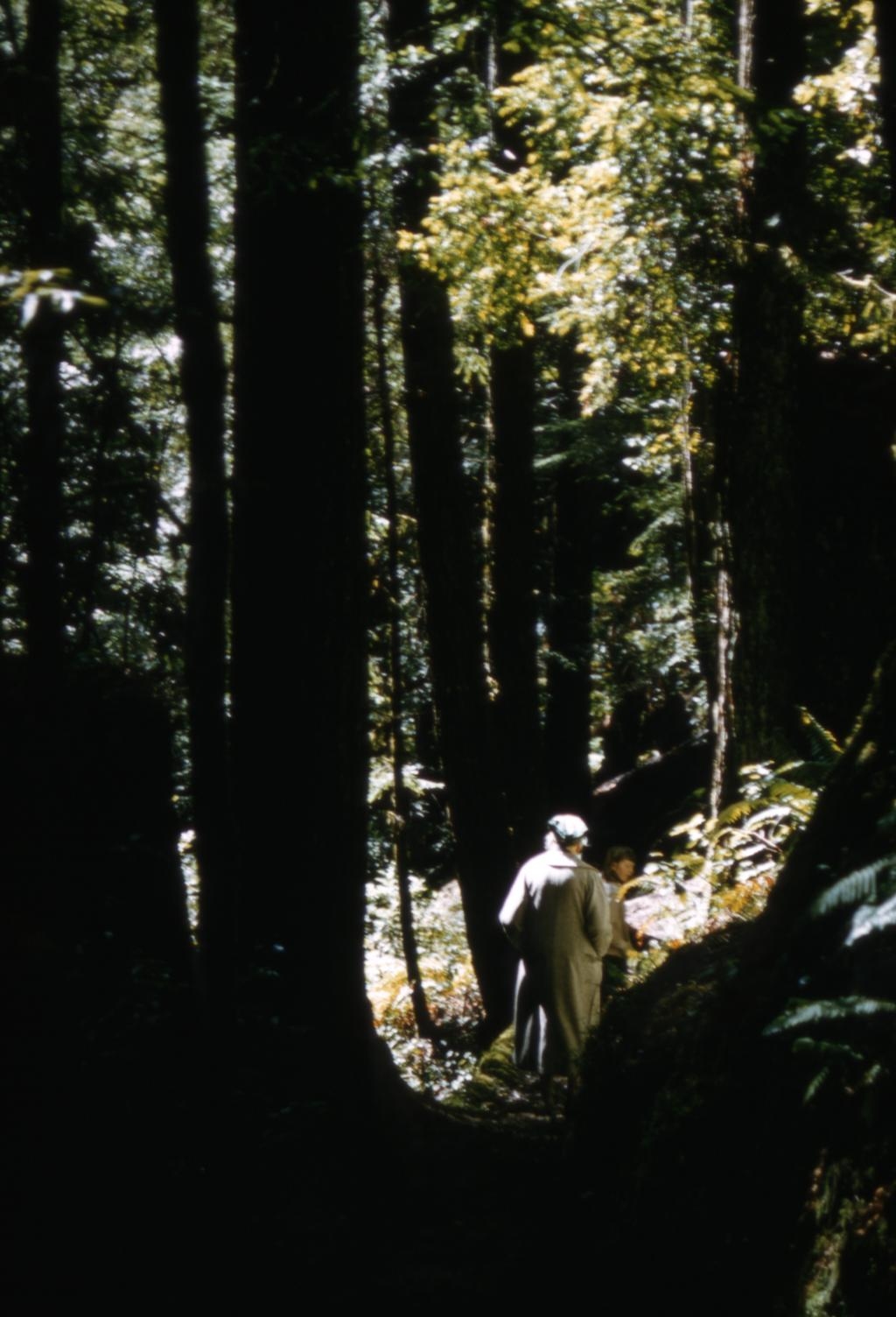 May T. Watts walking among trees in a forest, possibly in the Great Smoky Mountains. A figure of another person, possibly a child, is visible walking in front of Watts.