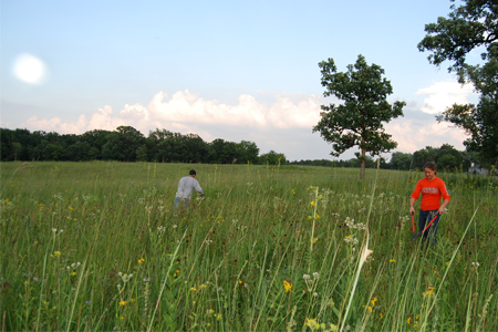 A man and woman use tools to remove invasive plants in a prairie setting